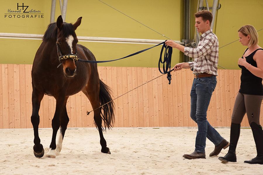 Mobiler Reitunterricht, Pferdetraining, Reitlehrer